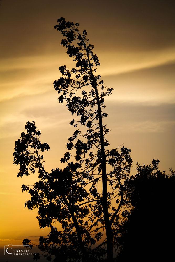 Until the sun sets by Christopher Karam