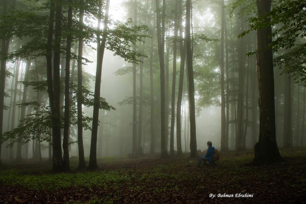 alone  by Bahman Ebrahimi