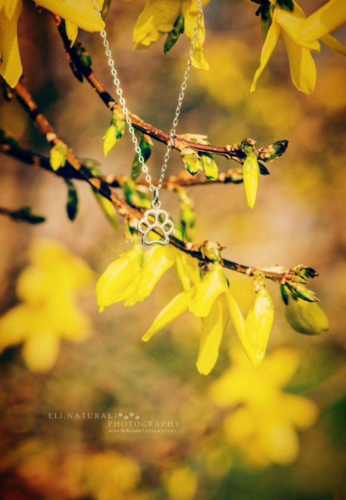 Spring ' paw by Eli.NaturalPhotography