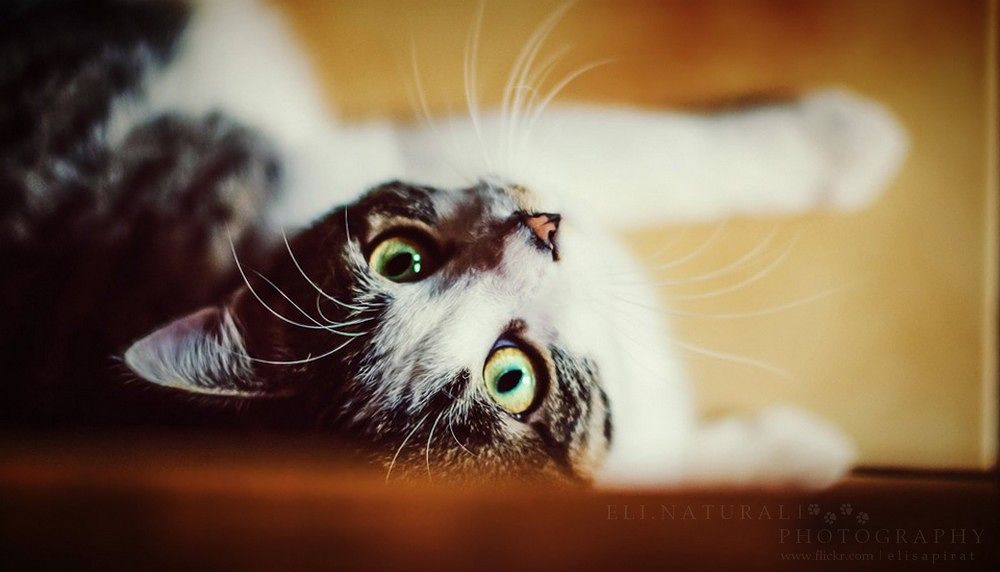 Qui veut jouer à chat ? by Eli.NaturalPhotography