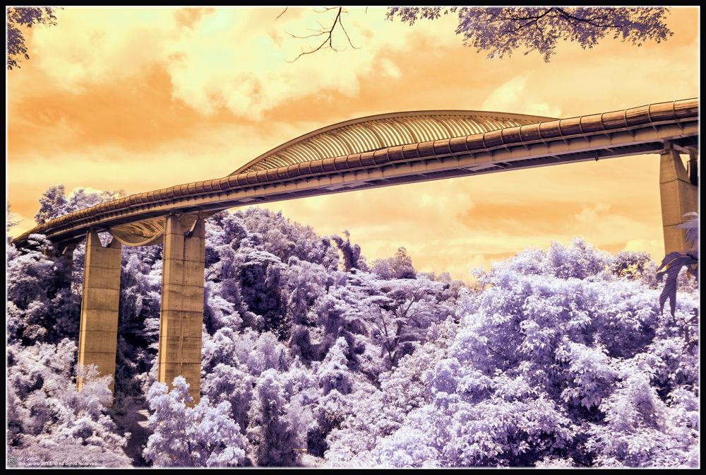 Vou Te Contar (Infrared Photo) by Vinz Eymard