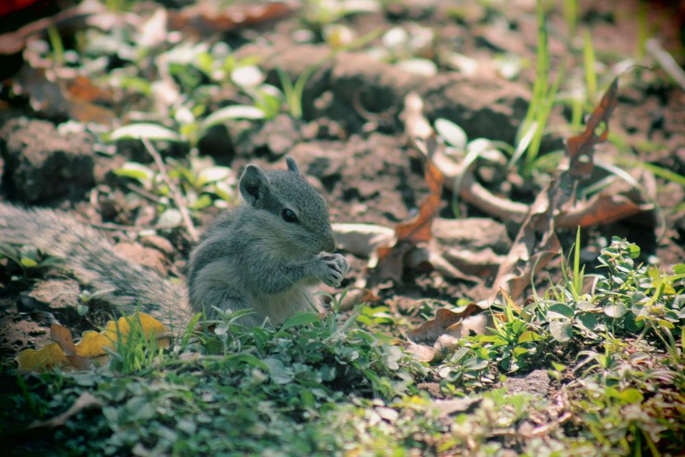 Squirrel by Rigved Gawde