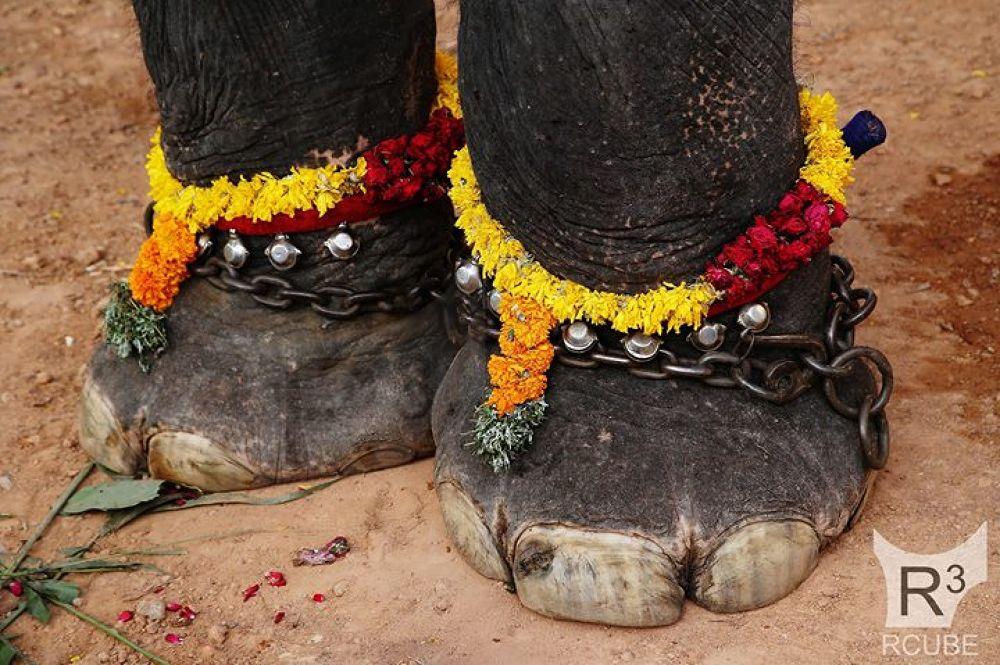 kerala elephant legg with chilanka by Rajesh RCUBE