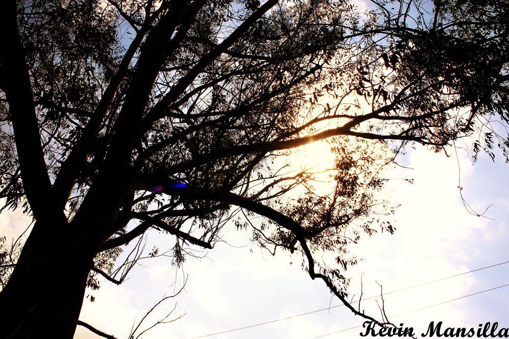 Tree! by Kevin Mansilla