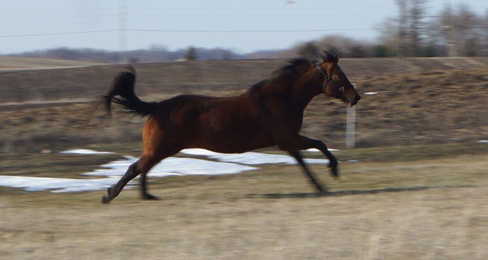 Full speed ahead by Cahira