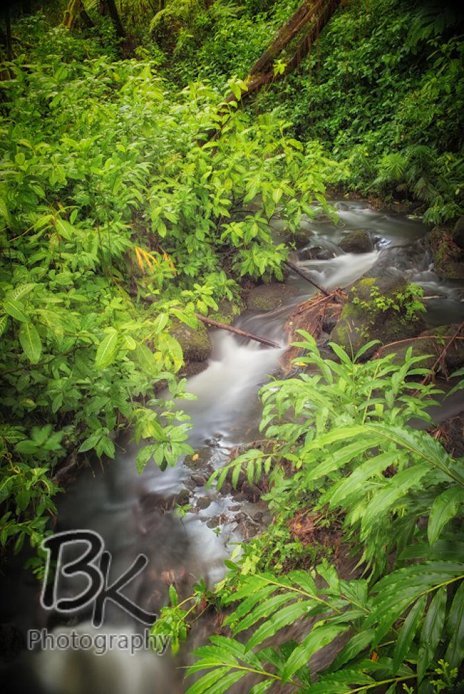 Hawaii Big Island -113 - Copy by Bill Klingbeil