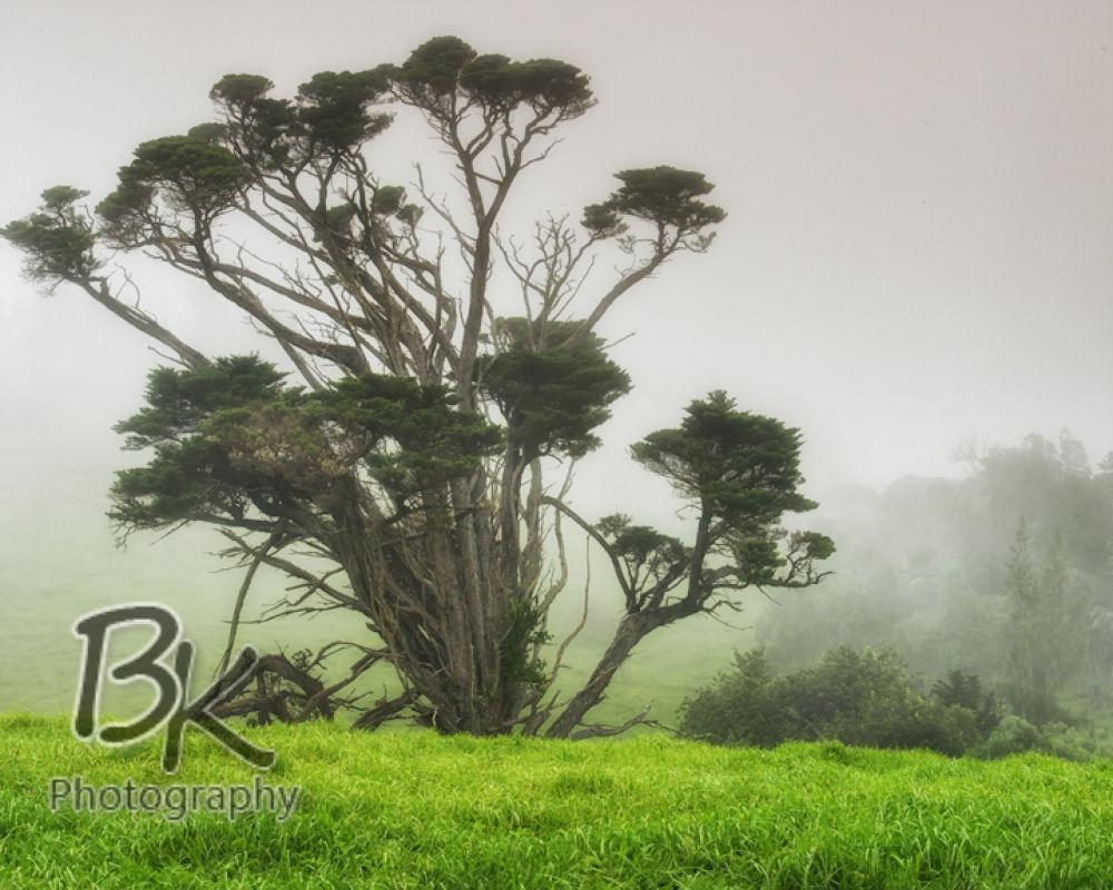 Hawaii Big Island -75 - Copy by Bill Klingbeil