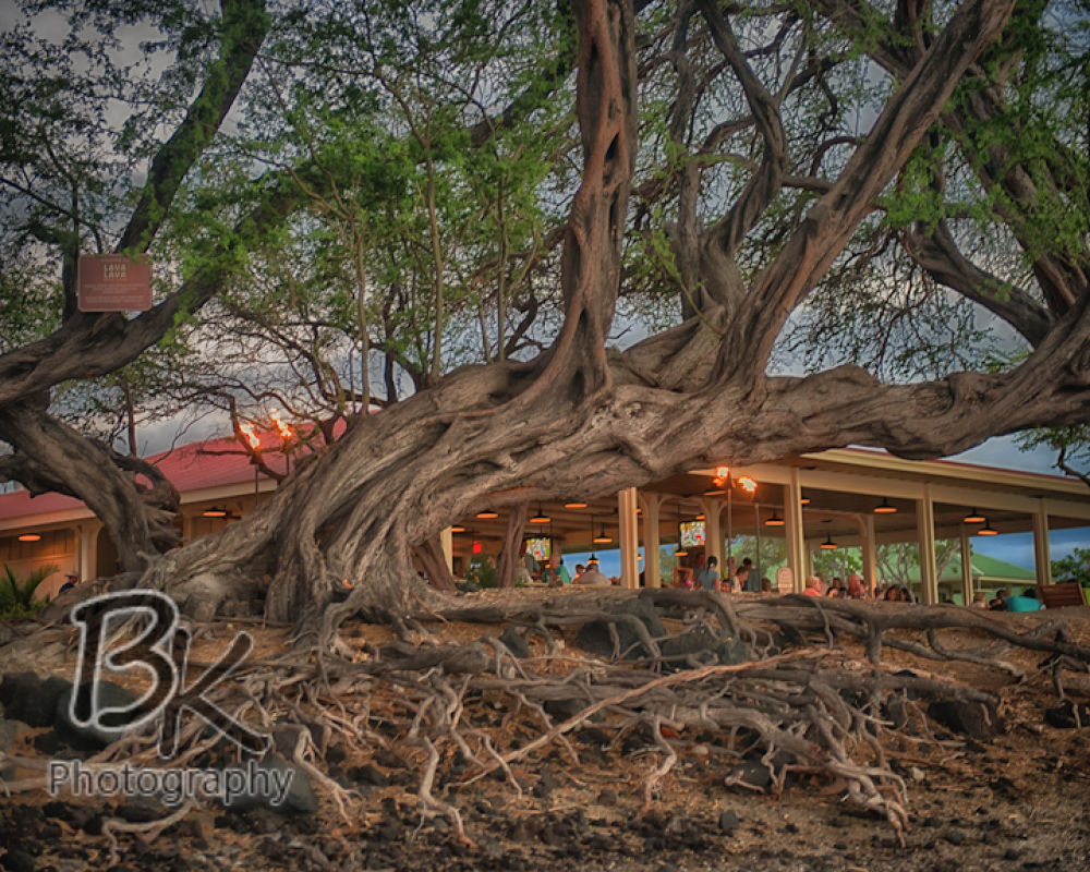 Hawaii Big Island -93 - Copy by Bill Klingbeil