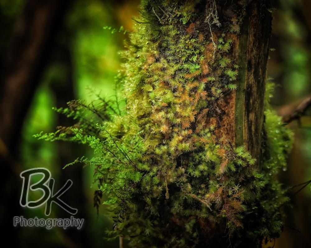 Hawaii Big Island -111 - Copy by Bill Klingbeil