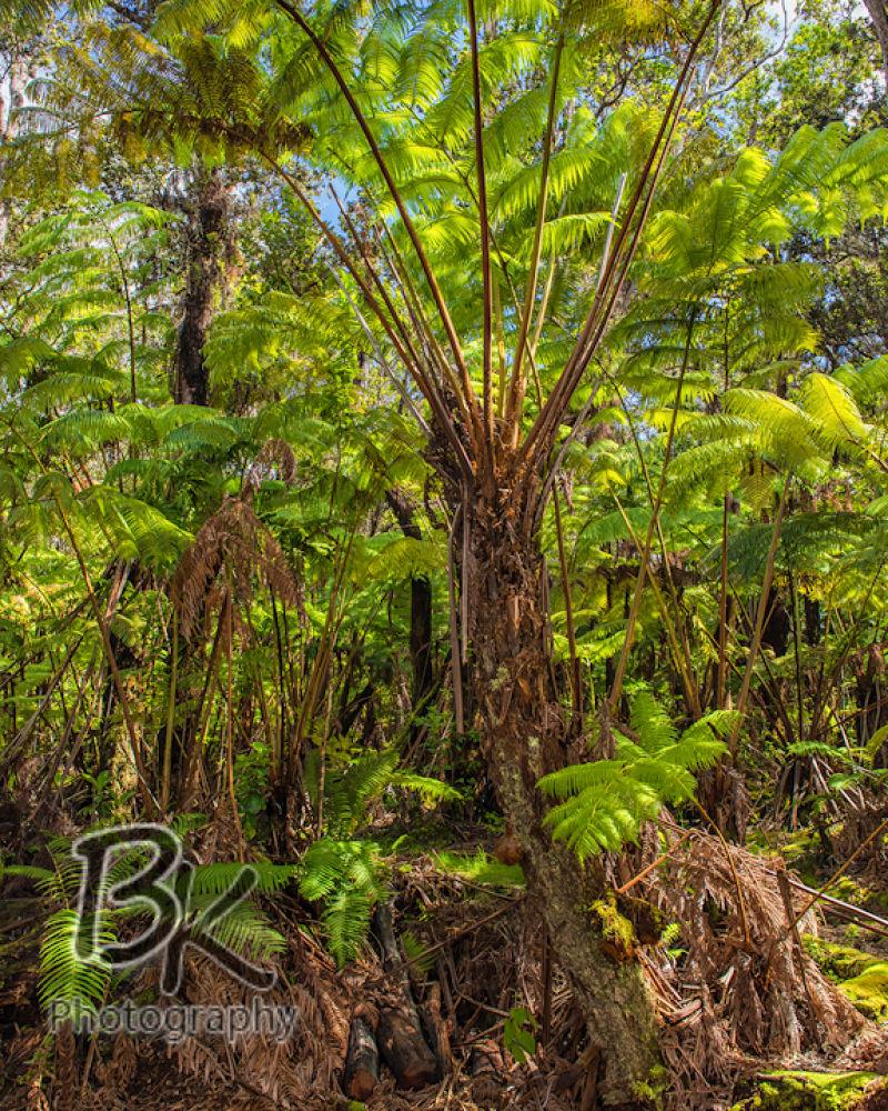 Hawaii Big Island -53 - Copy by Bill Klingbeil