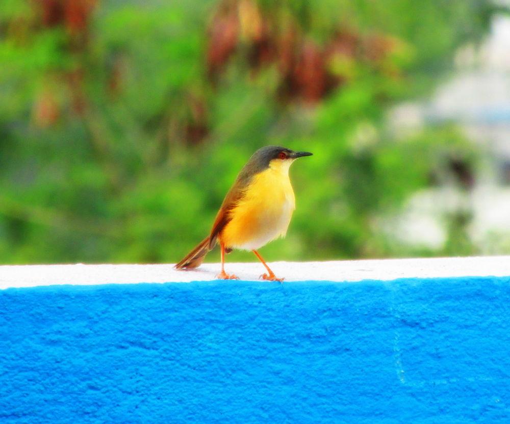 Bird by Richa Sharma