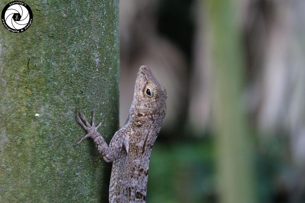 Lizard by Marietty Rodriguez