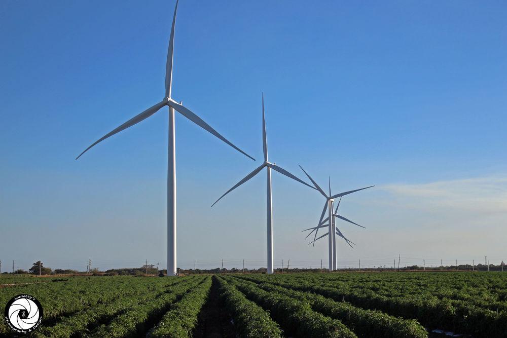 Wind mills Santa Isabel, Puerto Rico by Marietty Rodriguez