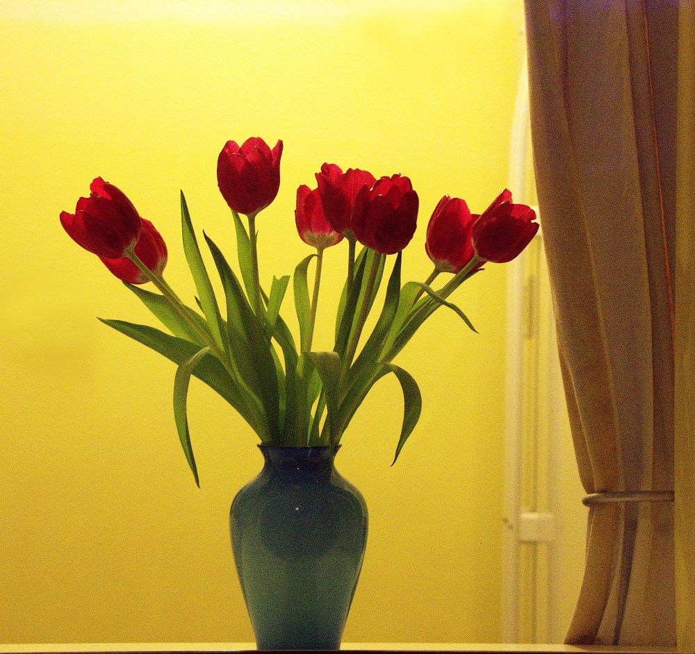 Photo in Still Life #flowers #cut #vase #tulips #wall #yellow #red #leaves #green #curtain