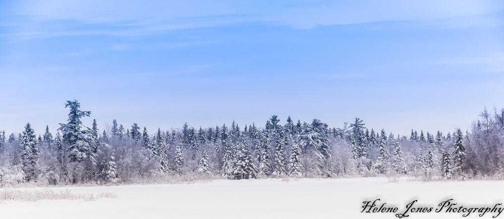 winter 2013 by Helen Jones