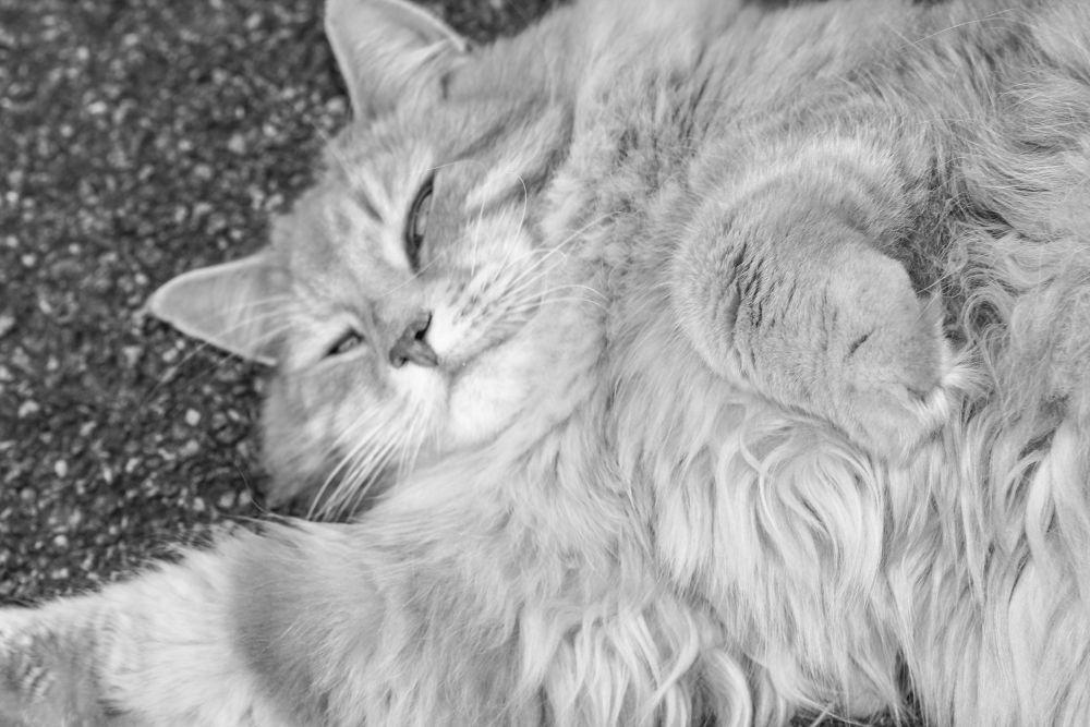 kitty by Helen Jones