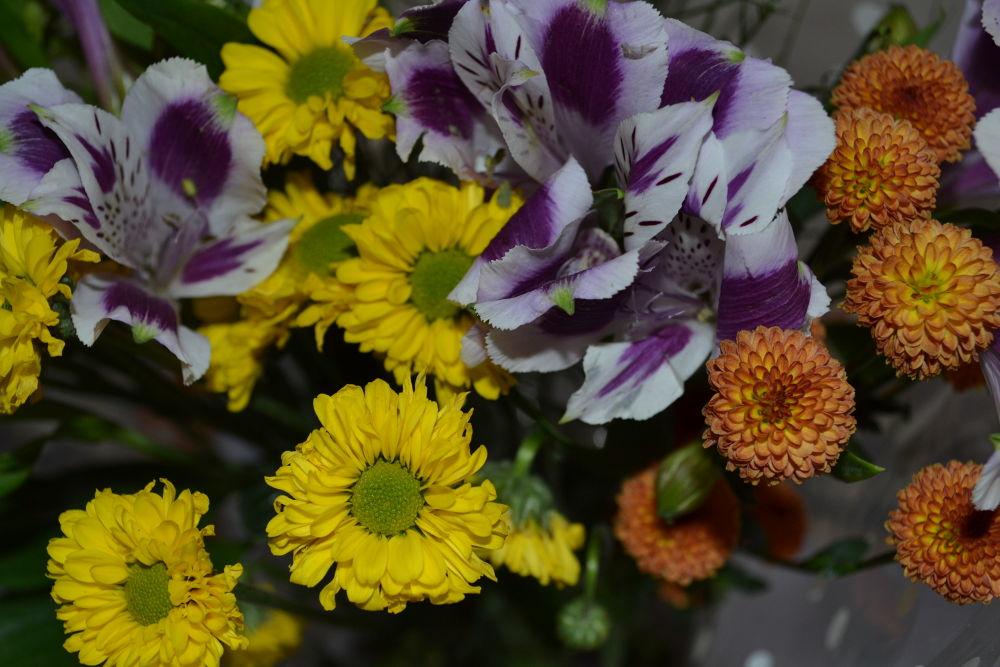 flowers by Danuza Cristhy