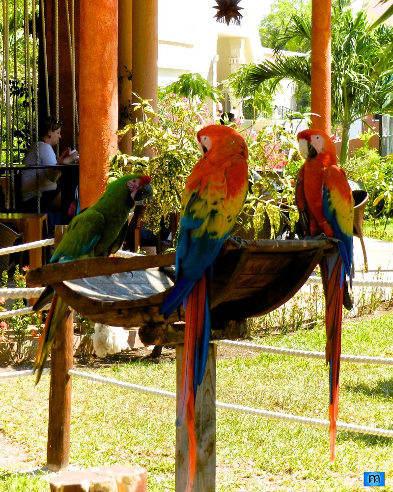 Colors of Mexico: Guacamayas by Pablo Muniz
