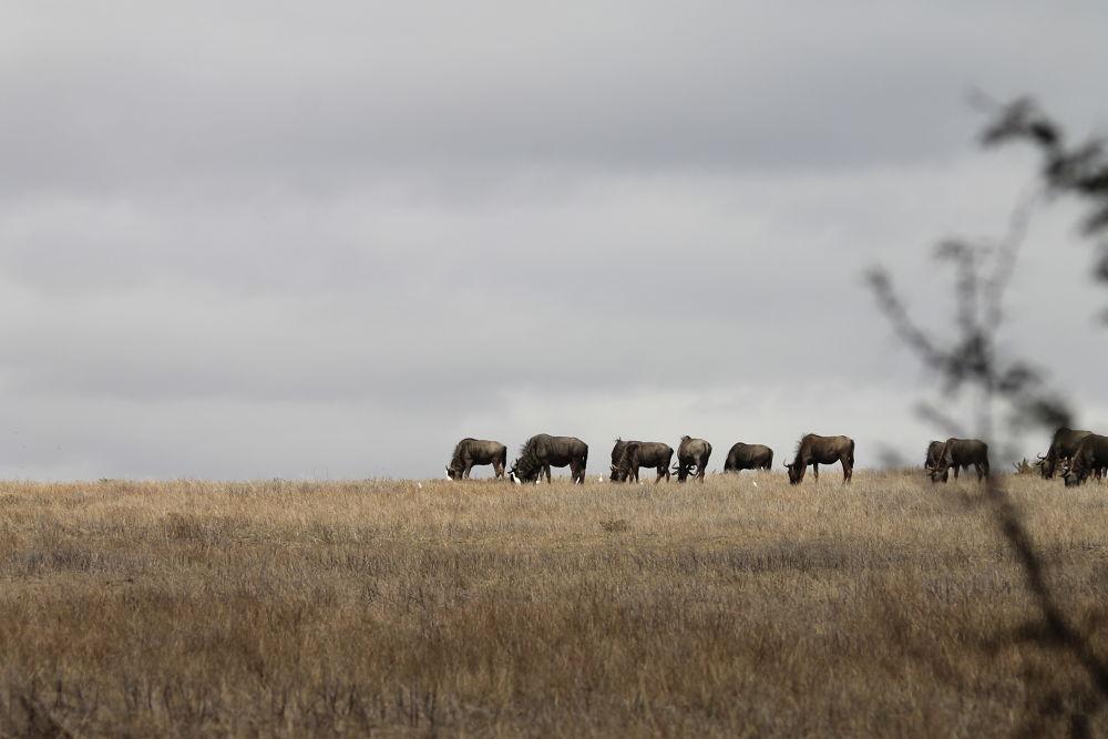 Wildlife in the backyard by Luke Hart