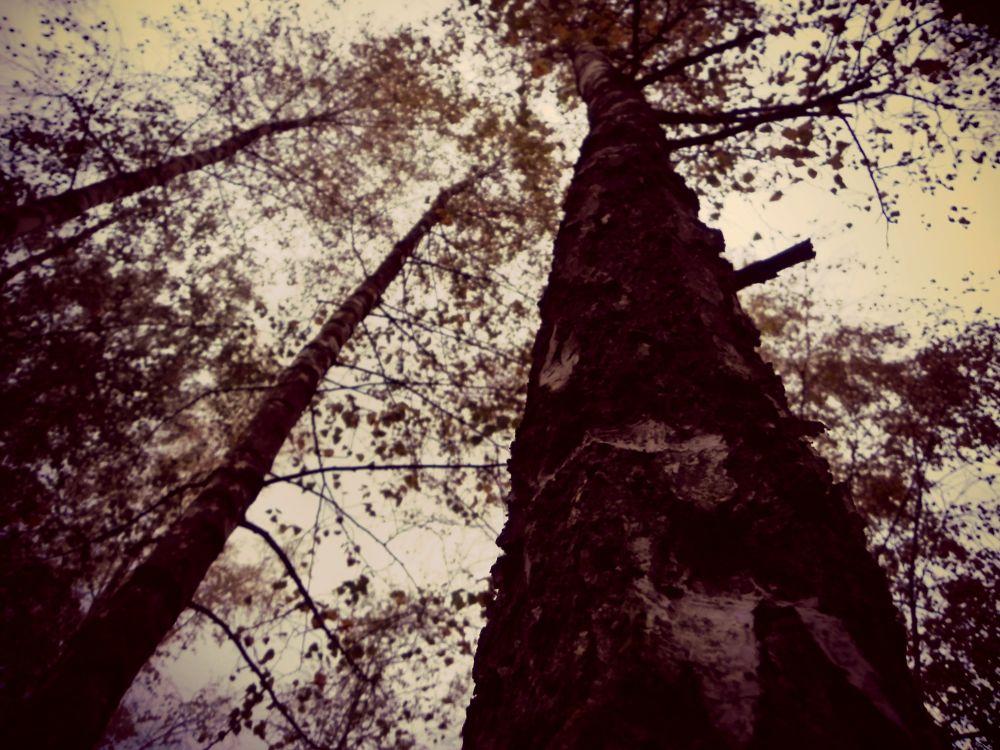 tree of life. by LynnVanBoom