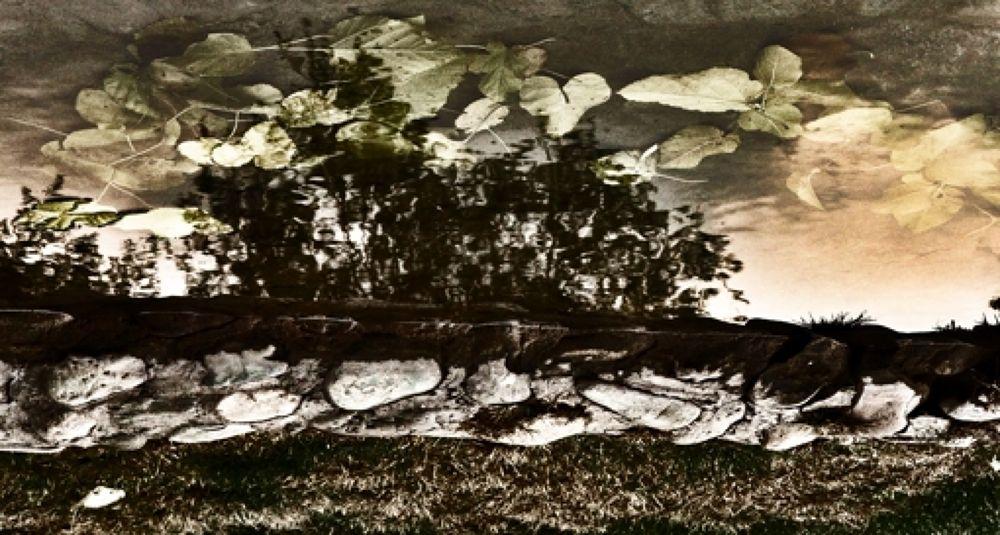Nature (1) (Copy) by eslamipour91