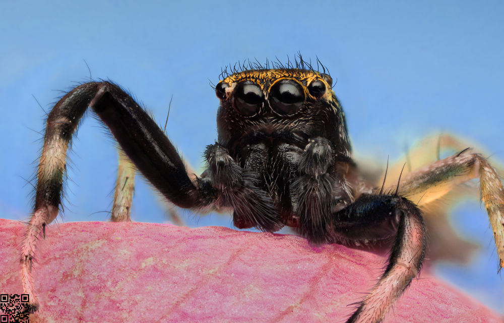 spider by Alper Büşra DOMAÇ