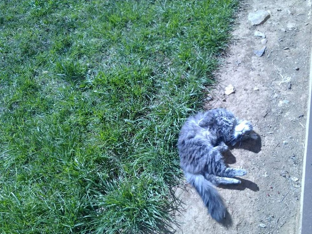 Heaven...This Looks like a good place to nap but first I think I'll Roll in the Dirt!!! by Michelle Kidwellwritingforhisglory