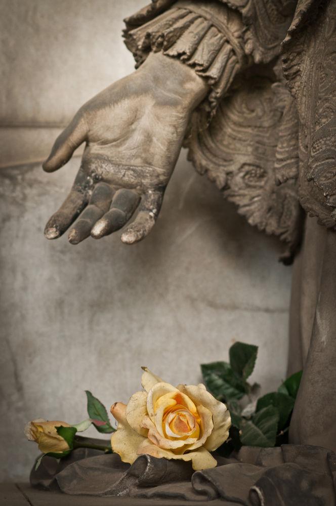 yellow roses by lucaparamidani