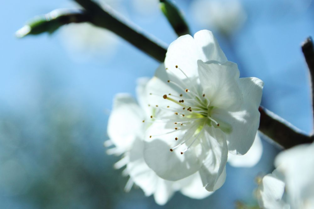 Flower by Lacar
