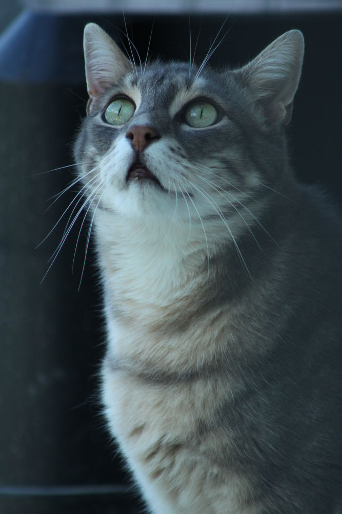 Cat by Lacar
