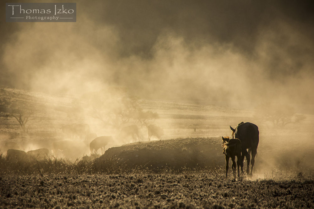 Mare & foal walking through the dusty desert plains by Thomas Izko