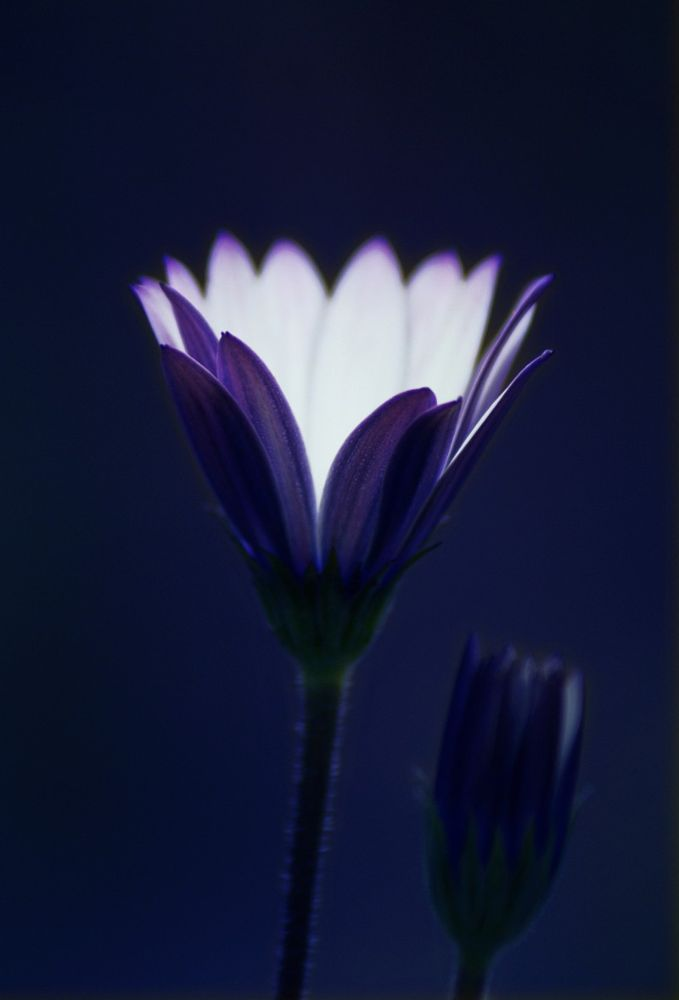 blu by silvia73