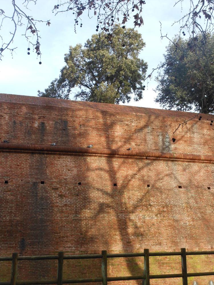 Albero o non albero ?! by Nicola Alocci