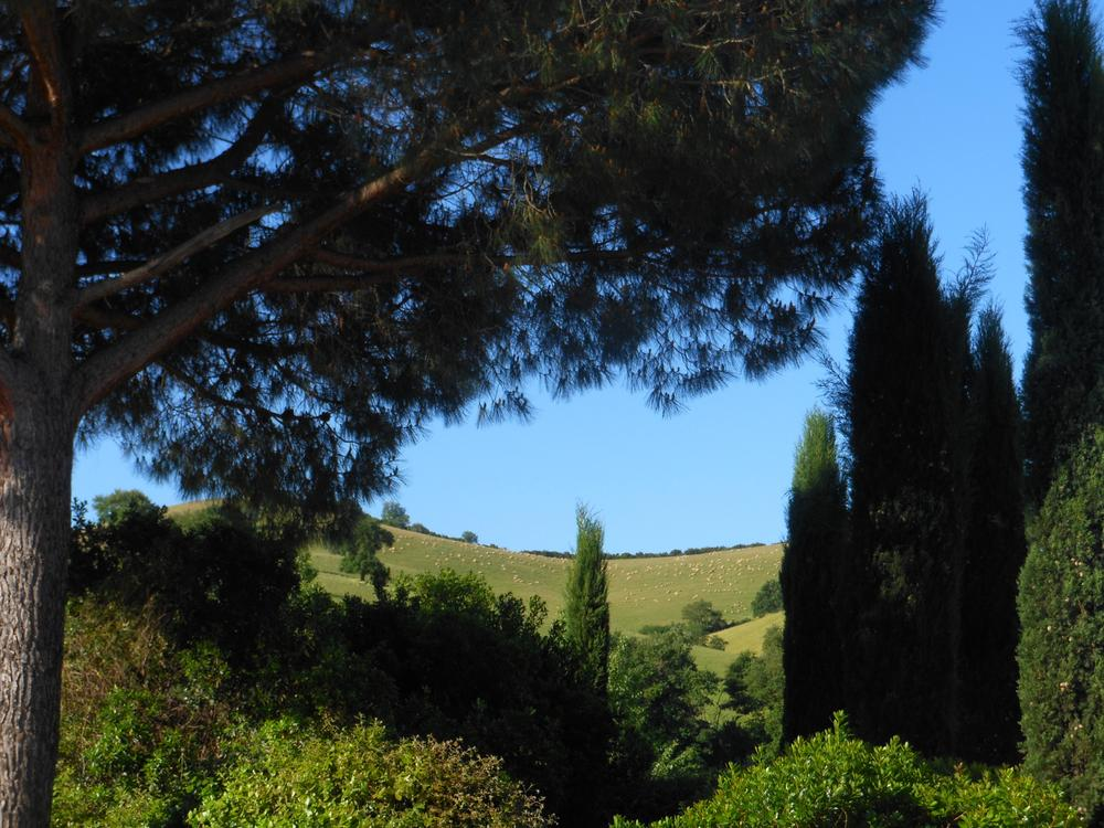 Tuscan beauty by Nicola Alocci
