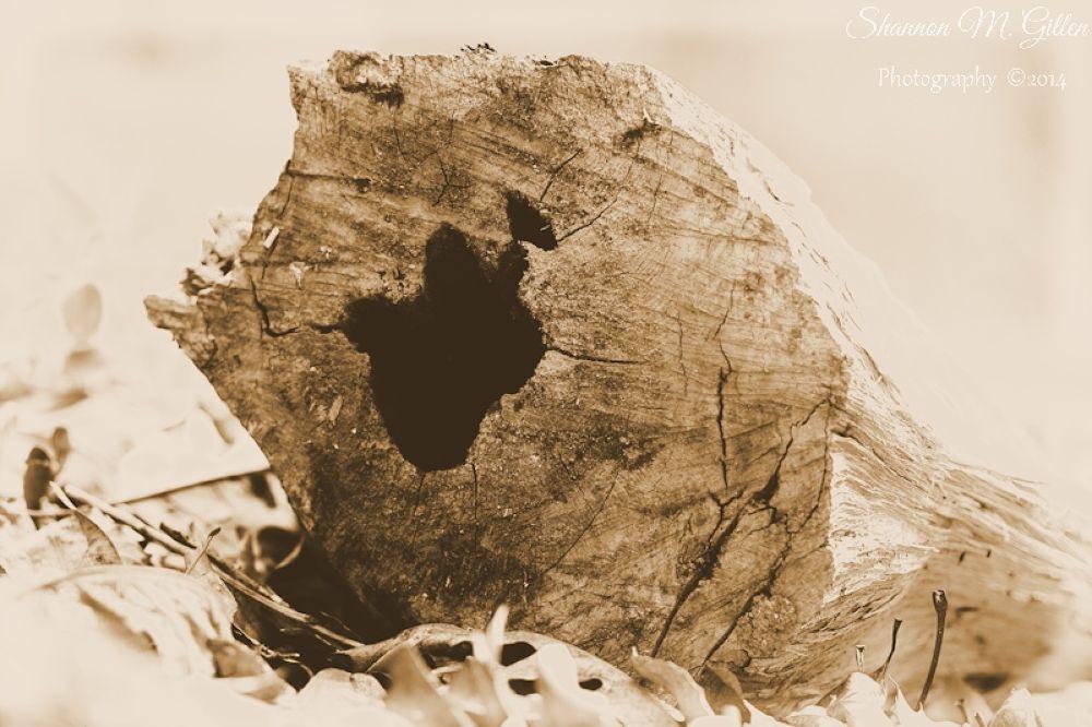 Rabbit's Head in Silhouette by Shannon Gillen