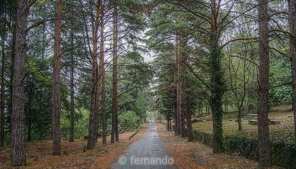 Photo in Landscape #camino #pinos #hervás
