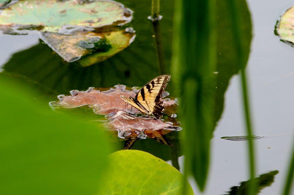 The Resting Butterfly by Lauren Zinn