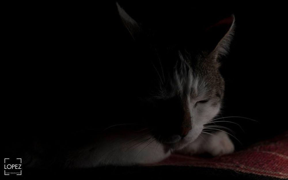 Cat Nap by Jose Lopez