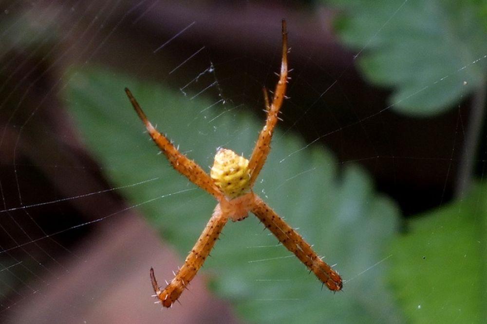 Spider by Ibnu33