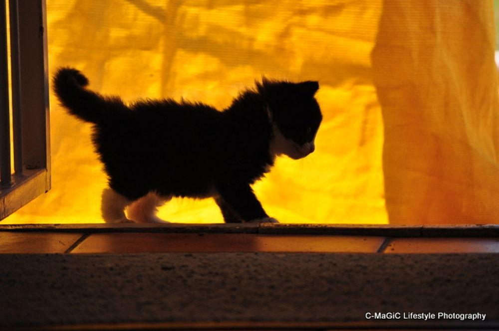 Photo in Animal #animal #love #cat #pet #kitten #cape town