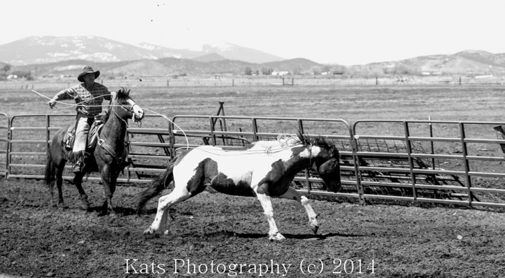 Roping the Stud Colt by Kathren Taylor