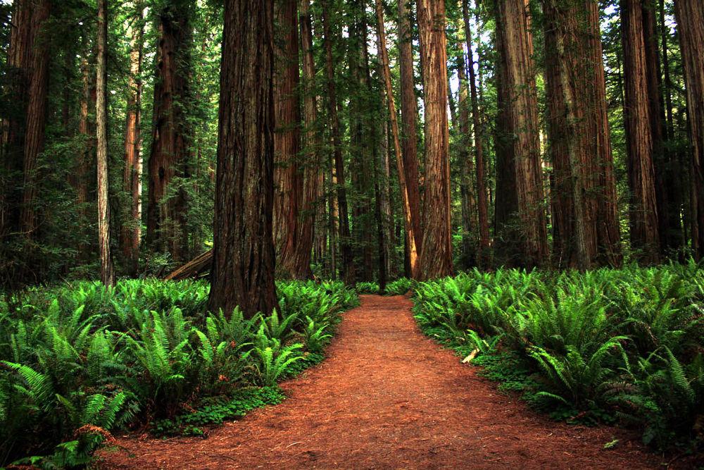 stout grove by Leah P
