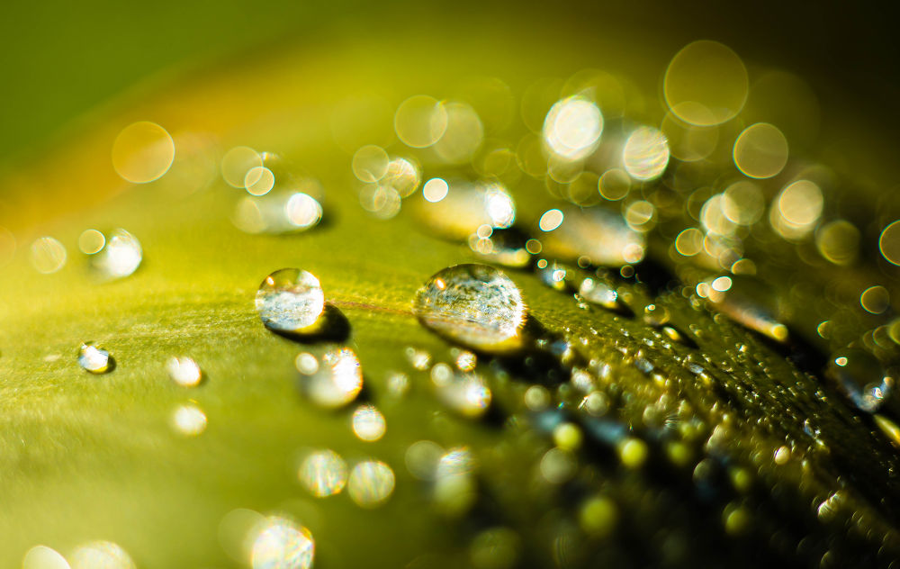 Morning Drops by knoulas