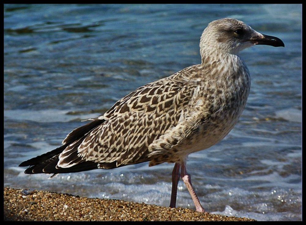 sea gull by Αντώνης Κοροτσάκης