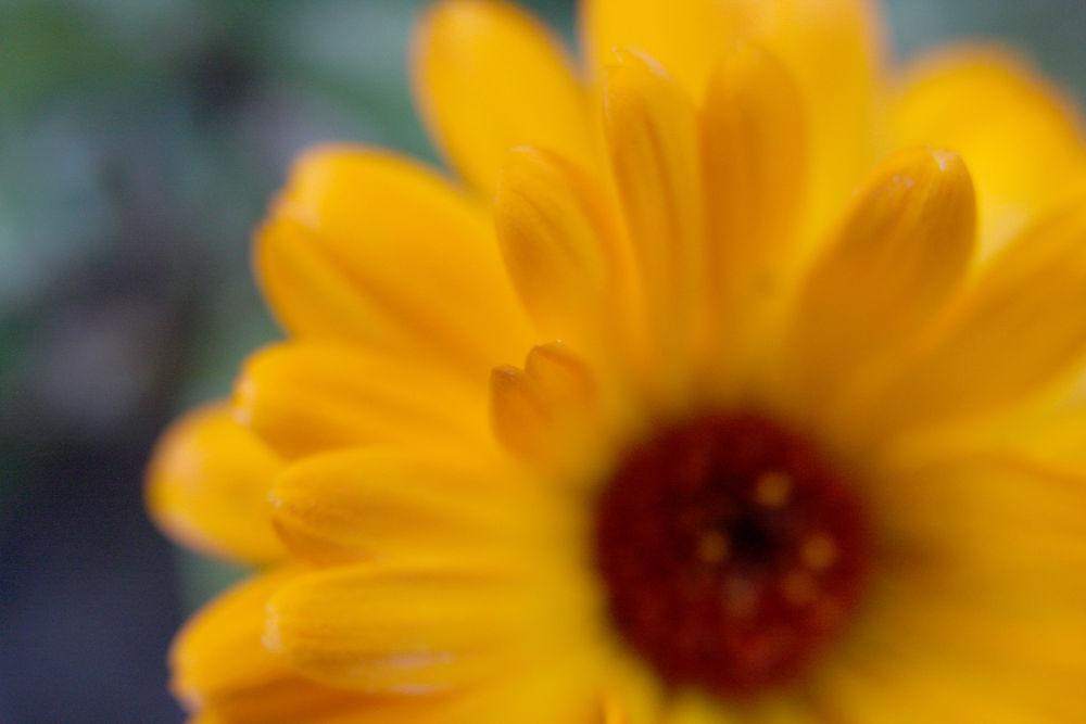 Photo in Macro #flower #macro #fleur #nature #macrographie #lumière #acidezen #www.acidezen.fr #laurent delfraissy