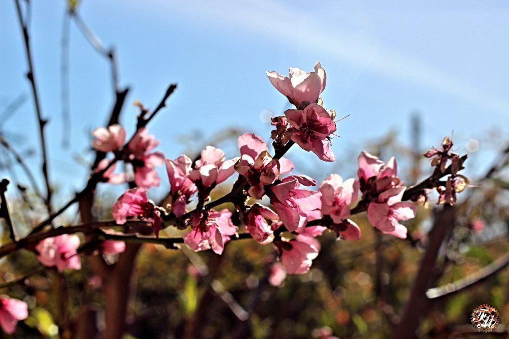 Spring buds by Deborah Divis