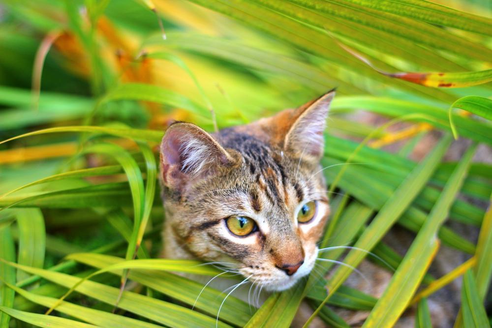 Jungle cat by Deborah Divis