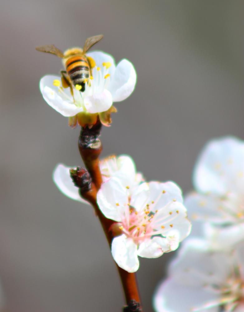 Photo in Animal #bee #flower #bud