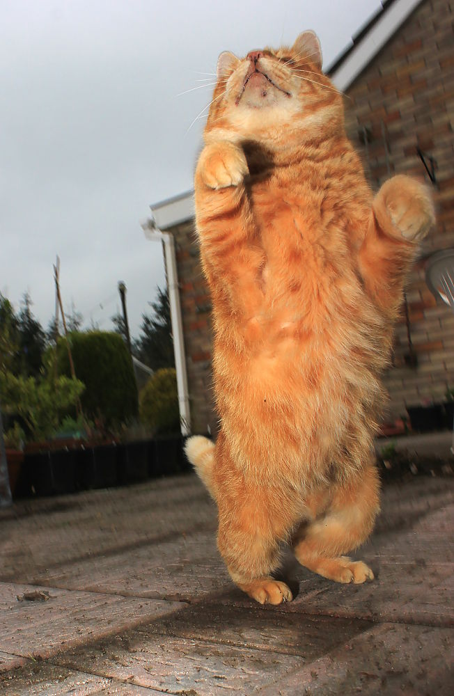 Jumping cat by Turnip Towers