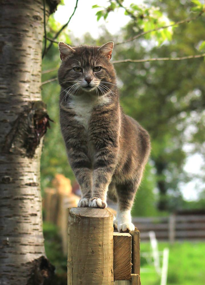 King of the fence by Turnip Towers